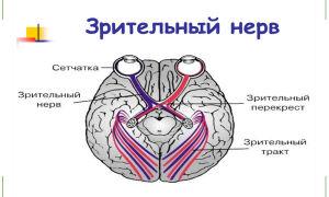 Зрительный нерв — строение, функции, заболевания