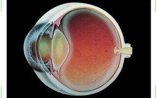 Хрусталик глаза — строение, функции, заболевания