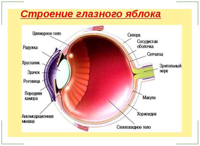 Болят глаза при надавливании на глазное яблоко