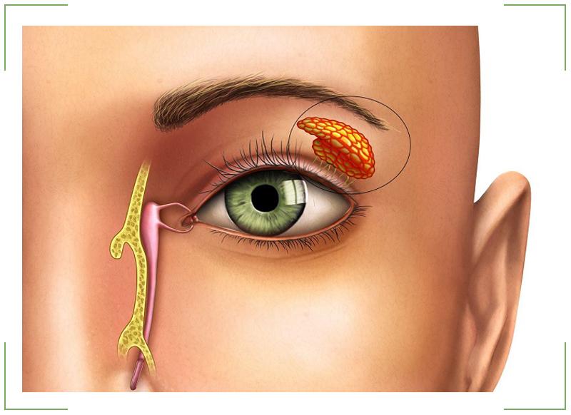 Конъюнктивальный мешок глаза человека - что это такое