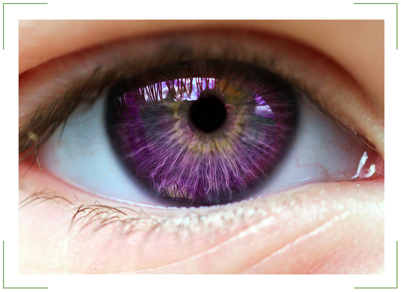 фиалковый цвет глаз